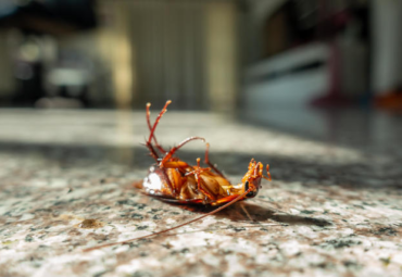 Tips to Prevent and Control Cockroaches from Your Home