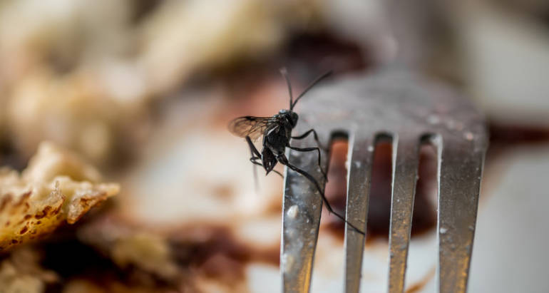 3 Pests That Can Get Into Your Restaurant